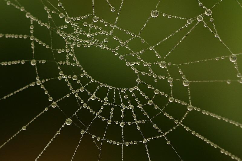 spinnenweb met water